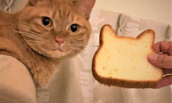 猫と猫型食パン