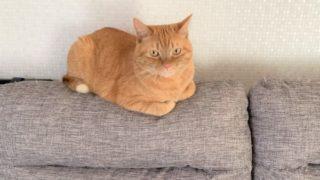 ソファの上のナナ