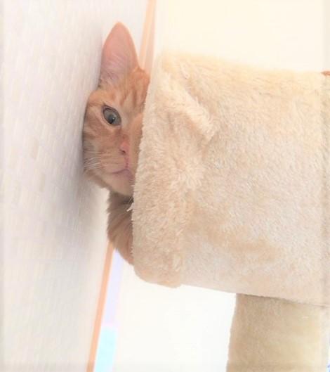 I隙間から覗く猫