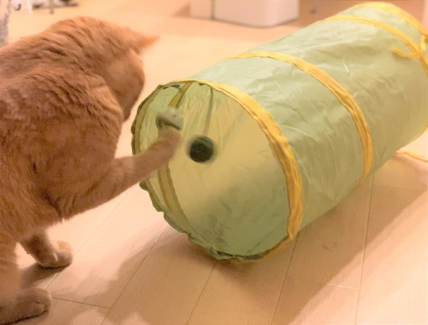 スリーコインズ猫トンネル