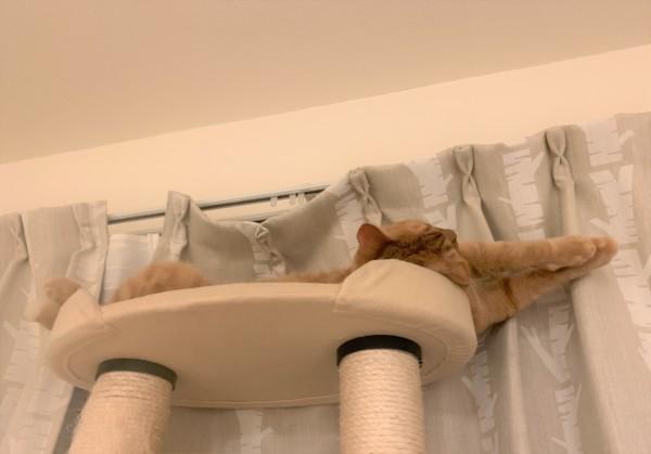 キャットタワーで伸びをするナナ