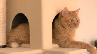キャットタワー大型猫ナナ