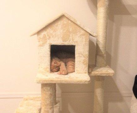 隠れ家で寝るナナ