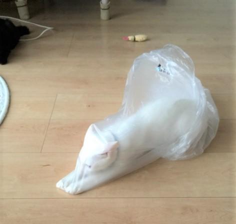 袋の中で遊ぶ猫