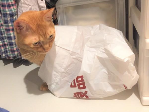 猫とビニール袋