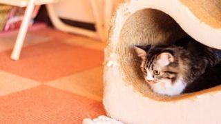 ハウスに入る猫