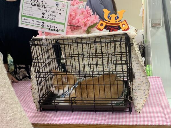 保護猫譲渡会 埼玉 島忠